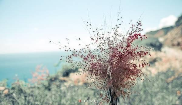 Sắc tím hồng của hoa dại trên đường lên đỉnh Bàn Cờ (Sơn Trà, Đà Nẵng).