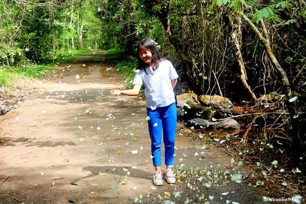 Mùa bướm làm cánh rừng già trở nên sống động và lãng mạn không khác gì cảnh phim.