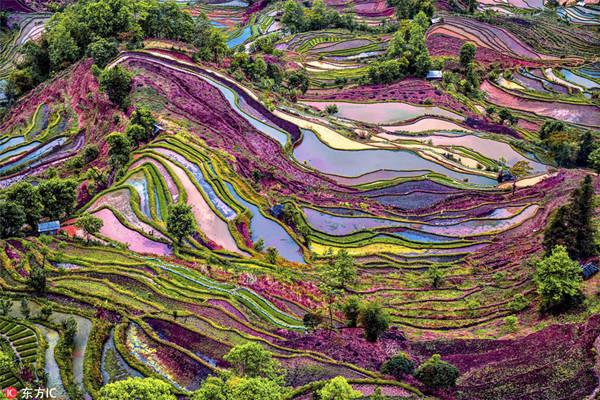 Đây là khu vực có lịch sử lên tới 1.200 năm. Vùng trung tâm của ruộng bậc thang nằm ở Nguyên Dương, tỉnh Vân Nam, Trung Quốc. Khu vực này có 1 triệu ha và 16.600 ha đã được UNESCO công nhận là di sản thế giới.