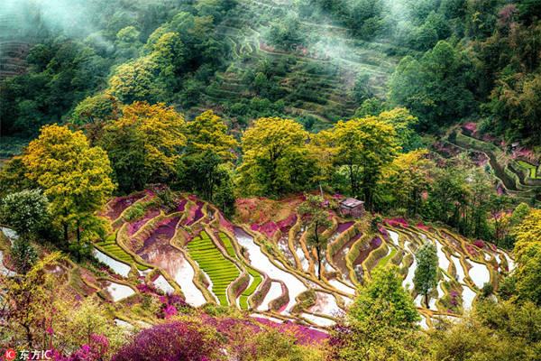 Giới nhiếp ảnh bị những thửa ruộng bậc thang mê hoặc, mùa nào cũng có không ít người lặn lội đường xa đến với Nguyên Dương, tìm tòi những góc chụp đẹp nhất.