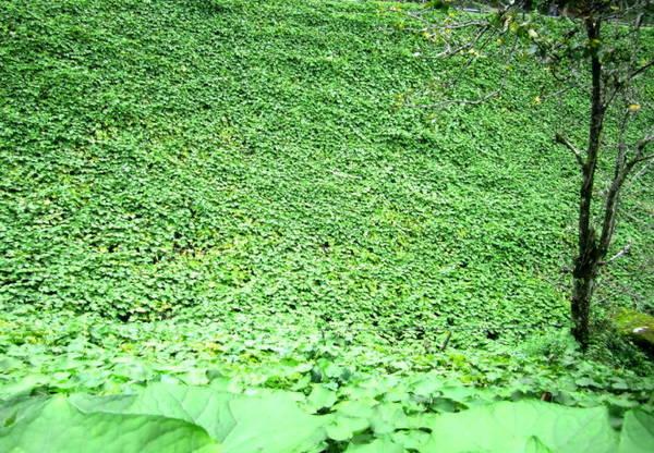 Su su được người dân trồng cả dưới những thung lũng - Ảnh: N.T.LƯỢNG