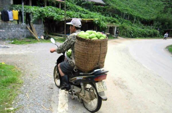 Người dân dùng xe máy thồ su su về sau mỗi ngày thu hái - Ảnh: N.T.LƯỢNG