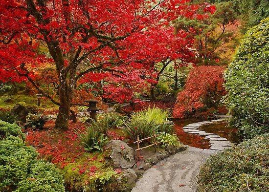 Đảo Vancouver: Butchart Gardens ở Victoria là nơi hoàn hảo để chứng kiến sự thay đổi của những chiếc lá trên bờ biển phía tây của Canada. Khu vực Vườn Nhật Bản trong Butchart Gardens đặc biệt hấp dẫn và sống động với các màu đỏ, vàng vàcam của lá phong và màu sắc của hoa cúc. Thời gian chiêm ngưỡng tuyệt vời nhất là trong tháng Mười và tháng Mười một.