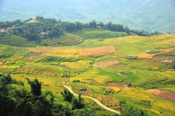 Là một xã miền núi thuộc huyện Bát Xát, tỉnh Lào Cai, Y Tý nằm trên vùng núi đá có độ cao khoảng 2.000 m so với mặt nước biển. Ở độ cao ấy, thời tiết Y Tý đỏng đảnh, sớm nắng, chiều mưa, buổi trưa mù mịt. Ngay cả những người sinh ra và lớn lên trên mảnh đất này cũng không thể dự báo chính xác sự chuyển biến của tiết trời.