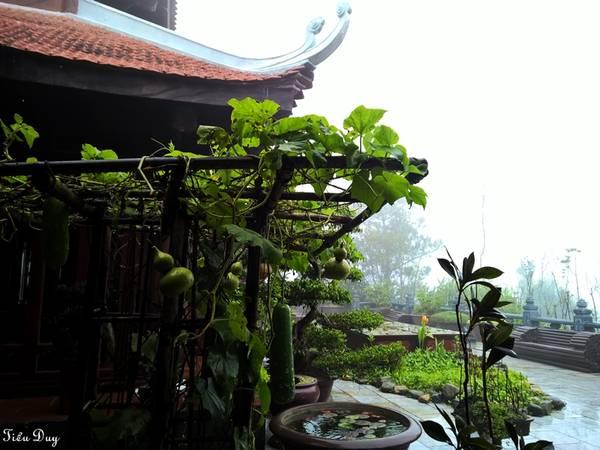 Khu vườn xanh mướt của Trú Vũ Trà Quán, xung quanh là mây mù bao phủ khắp nơi tạo nên một khung cảnh như chốn tiên bồng. Ảnh: Tiểu Duy