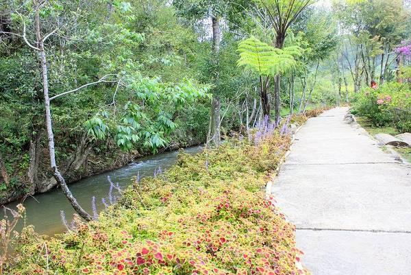 Lối đi bên trong Ma rừng lữ quán đầy hoa Sim và Liễu rủ. Ảnh: Dalattrongtoi.com