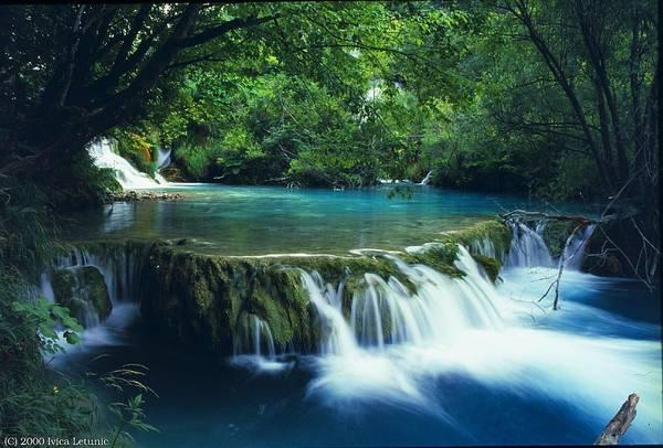 Image result for vườn quốc gia bạch mã