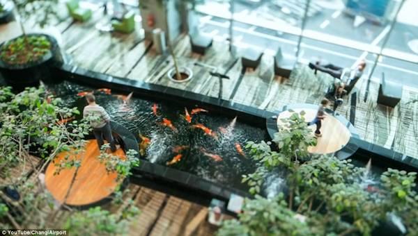 Du khách đứng trên những bục tròn được làm bằng gỗ có kính bao quanh, chiêm ngưỡng những con cá khổng lồ bơi phía dưới.