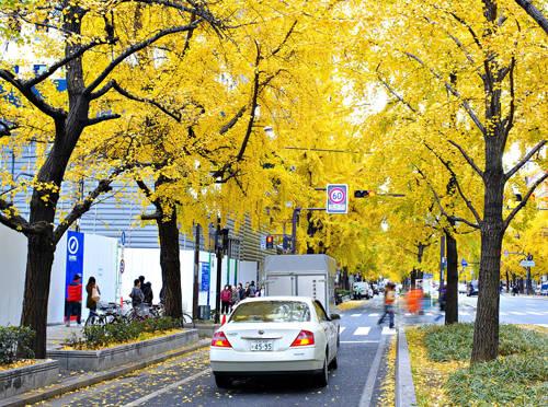 Tận hưởng cảnh đẹp bậc nhất vào mùa Thu ở OSAKA nước Nhật