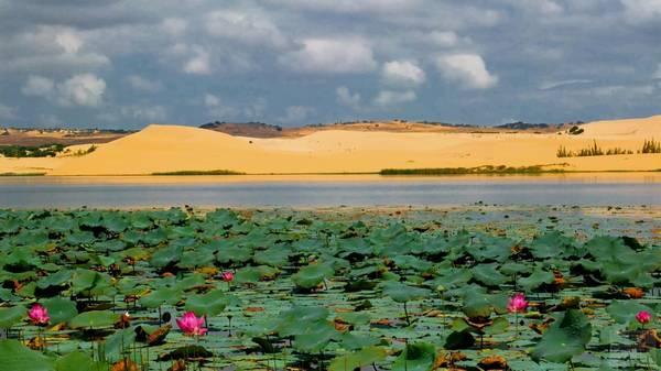Đây thực sự là một địa điểm du lịch thật tuyệt vời, bởi giữa đồi cát tựa sa mạc có một hồ nước ngọt trong vắt, nếu đến đúng mùa còn có hoa sen nở. Đúng là một phong cảnh không nơi nào sánh bằng. - Ảnh: duongbo
