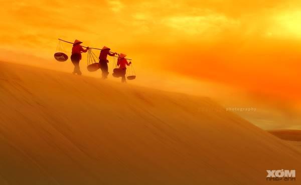 Khi bình minh lên, nắng chiếu đủ mọi góc cạnh, ta sẽ thấy rực rỡ một màu cát sáng óng. Thỉnh thoảng bụi tung mịt mù trong gió, ta bắt gặp những gánh muối, những con bò kéo xe đi qua đồi cát tạo nên một khung hình nên thơ. - Ảnh: Cruise
