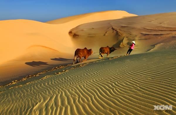 Đồi cát luôn biến hóa không chừng. Bạn chắc chắn sẽ không thể chụp lại một đường cong của đồi cát mình đã từng chụp lần trước. Vì thế, những bức ảnh chụp ở đây gần như không bao giờ cũ. - Ảnh: Huynhdungphoto