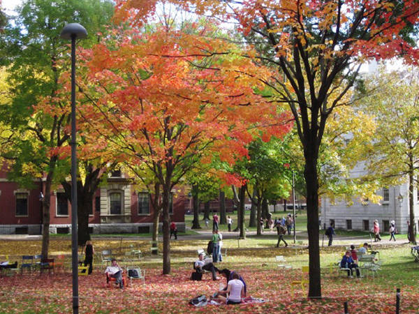 Khuôn viên trường Đại học Harvard trong sắc thu