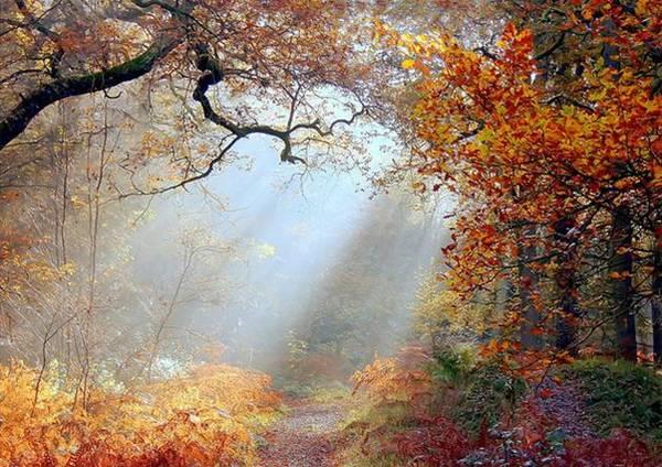 Rừng Dean giống như một tác phẩm nghệ thuật khi sang thu - Ảnh: flickr