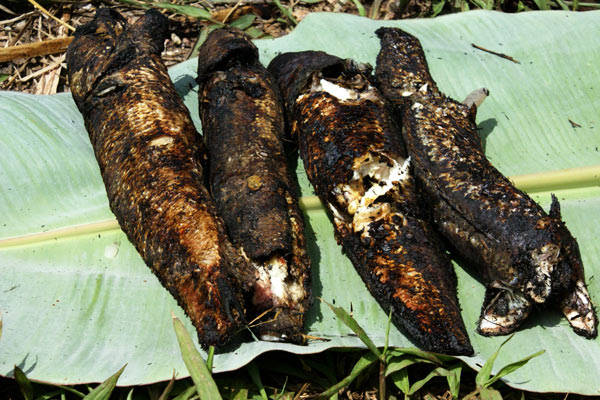 Cá lóc nướng trui, đặc sản khó quên ở An Giang.