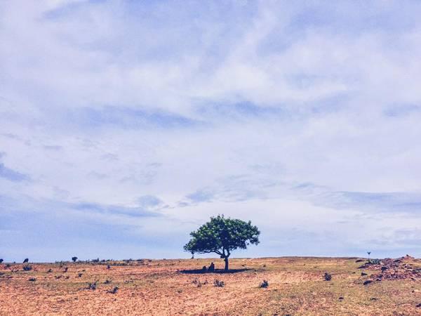 """""""Cây cô đơn"""" trên ngọn đồi hoang vu chỉ có nắng và gió."""
