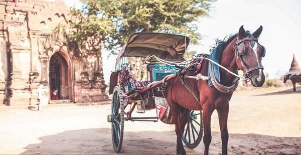 Xe ngựa là phương tiện tham quan thông dụng nhất dành cho khách du lịch.