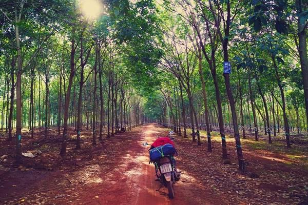 Mê cung rừng cao su rộng lớn từ ranh giới Đồng Nai qua Bình Phước tới tận ranh giới Lâm Đồng.