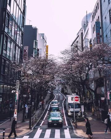 Con phố uốn mình duyên dáng dưới tán hoa.