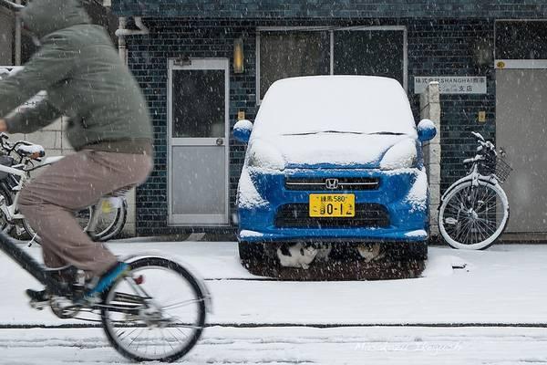 Những chú mèo trú tuyết dưới gầm một chiếc xe ôtô.
