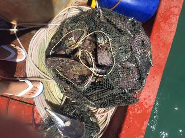 Thành quả sau một buổi lặn biển bắt hải sản.