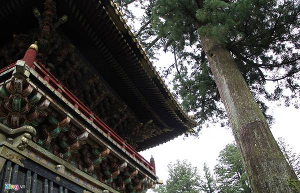Sau khi tướng quân Tokugawa Ieyasu chết năm 1616, Masatsuna Matsudaira đã xây dựng đền Nikko Toshogu, và ông bắt đầu trồng cây tuyết tùng Nhật Bản dọc theo con đường chính dẫn đến Nikko. Người ta ước tính có khoảng 200.000 cây tuyết tùng được trồng trong dịp này. Số lượng cây giảm đi rất nhiều và hiện nay chỉ còn 13.000 cây.