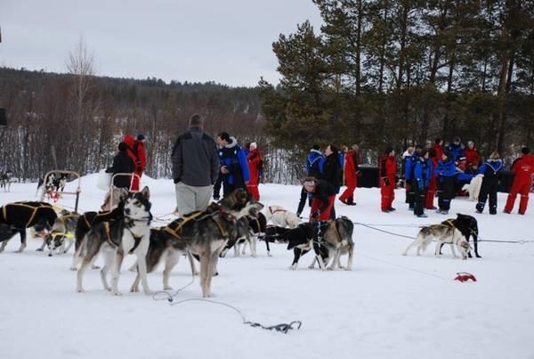 Một trong những trải nghiệm không thể bỏ qua khi đến Murmansk là thăm trại chó Husky Siberian, nơi có những con chó săn nổi tiếng vùng Bắc Cực. Du khách sẽ được thưởng thức trà và bánh đặc trưng của vùng, tiếp xúc với những con chó hoặc thử ngồi lên xe chó kéo. Ảnh: pasvikturist.