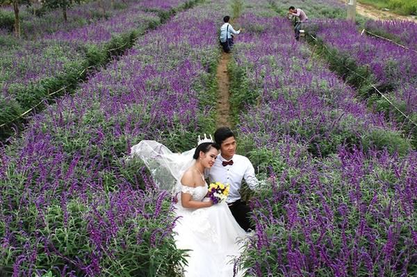 Nhiều đôi uyên ương cũng không bỏ lỡ cơ hội chụp ảnh cùng cánh đồng hoa khi đến với Bắc Hà.