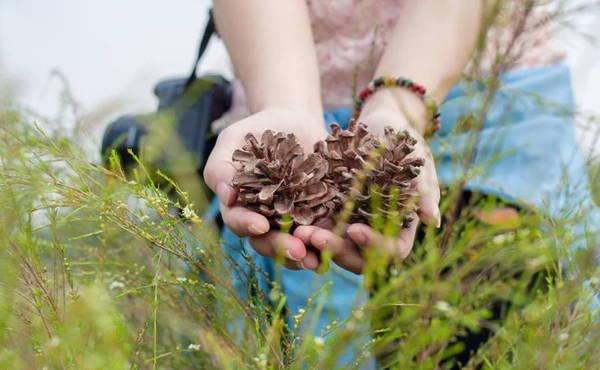 Hoa thông, hoa rễ, hai thứ hoa của loại cây đặc trưng của vùng đất địa linh nhân kiệt - Ảnh: Phương Huệ