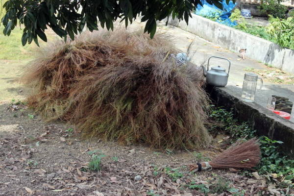 Chổi rễ được dùng quét ruông (tức những hạt lép, những lá lúa, tước có lẫn vào thóc) - Ảnh: Phương Huệ