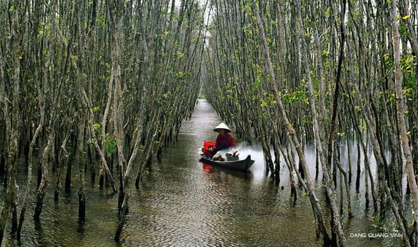 Rừng U Minh Hạ. Ảnh: Dang Quang Vinh