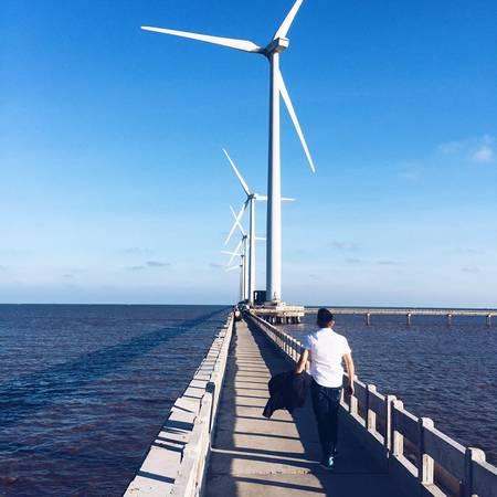 Cánh đồng quạt gió. Ảnh: Long Nguyễn