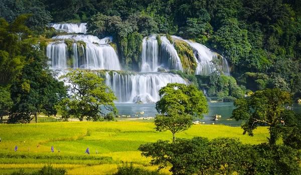 Bản Giốc là thác nước được mệnh danh đẹp nhất Việt Nam, thuộc huyện Trùng Khánh, Cao Bằng, giáp biên giới Trung Quốc. Tuy đây không phải thời điểm thác nhiều nước nhất, nhưng khung cảnh lúa vàng lại thu hút du khách đến Bản Giốc dịp này.