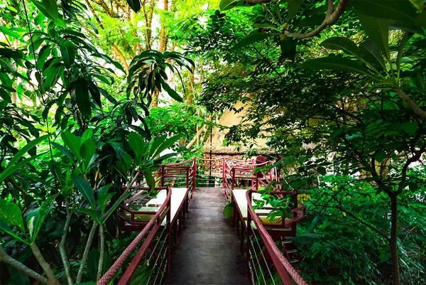 Những ngôi nhà cây được Đào Anh Khánh lên ý tưởng và bắt tay vào xây dựng cách đây gần 20 năm, trong khuôn viên rộng 2.500 m2. Các công trình được hoàn thiện dần trong nhiều năm.