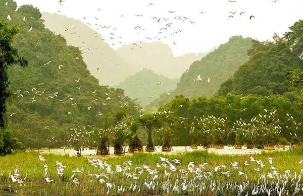 Chiêm ngưỡng bầy chim trở về ở Thung Nham: Thung Nham (hay Thung Chim) yên tĩnh, mát lành do được bao bọc trong hệ thống núi đá vôi, rừng nhiệt đới nguyên sinh và sông nước, môi trường thuận lợi để các loại động vật quý hiếm trú ngụ và sinh sống. Ảnh: Facebook Thung Nham.