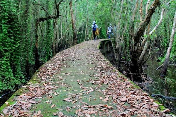 Con đường xuyên rừng tràm Tân Lập. Ảnh: Phước Bình.