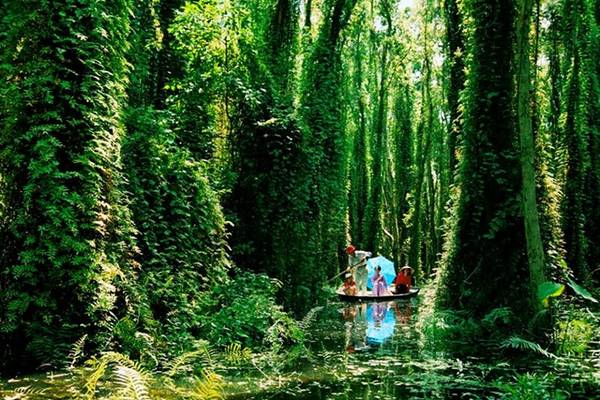 Du khách lênh đên trên những chiếc xuồng ba lá để tham quan, khám phá khu du lịch sinh thái Xẻo Quýt. Ảnh: Quatangsenhong.