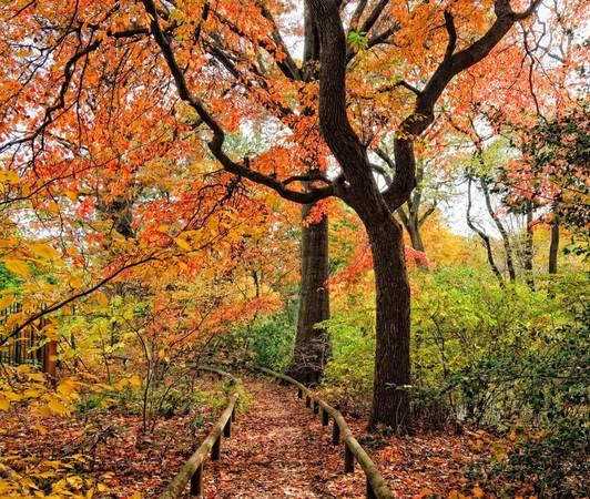 Vườn bách thảo Brooklyn, New York: Thoạt nhìn, người ta sẽ tưởng lối đi hoang dã này cách thành phố hàng trăm dặm. Nhưng hoá ra nó nằm ngay trong vườn bách thảo Brooklyn, New York. Du khách đến đây vào mùa thu cũng có thể ngắm nhìn hoa hồng nở muộn và những bất ngờ khác.