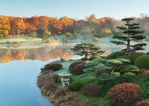 Vườn bách thảo Chicago: Vẻ đẹp của khu vườn Nhật Bản Elizabeth Hubert Malott rộng 17 mẫu Anh (tương đương gần 7 hecta) sẽ làm bạn ngây ngất, khi cây bạch quả chuyển sang màu vàng.