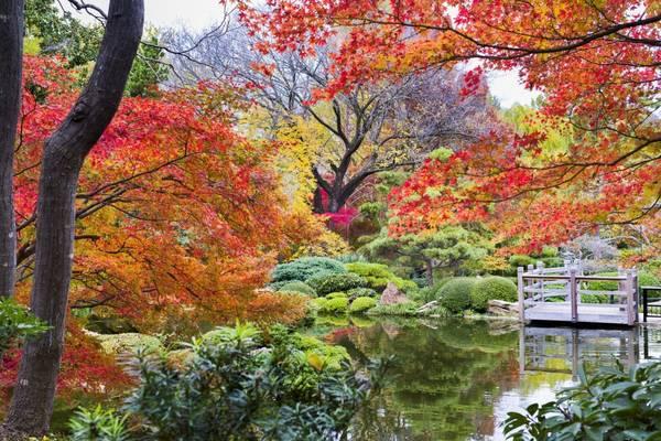Vườn bách thảo Fort Worth, Texas: Ít ai nghĩ Texas lại có một khu vườn Nhật Bản lung linh như vườn Fort Worth với đủ sắc màu màu thu như đỏ, cam, vàng…