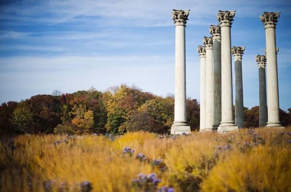 Vườn ươm quốc gia, Washington DC: Vườn quốc gia giống như một bảo tàng sống. Bạn có thể tìm thấy rất nhiều thực vật bản địa, cùng điểm tham quan thú vị như những cây cột của toà nhà quốc hội. Vào mùa thu, những cây cột gần 200 tuổi này trông như những ngọn đuốc vàng được bao quanh bởi vô vàn cỏ lá vàng ươm.