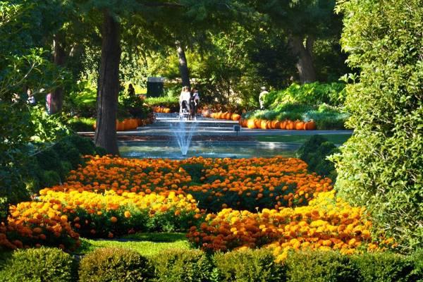 Vườn ươm Dallas: Đến thăm vườn ươm thành phố Dallas vào mùa thu, bạn sẽ mãn nhãn với hơn 90.000 quả bí ngô tròn và bí hồ lô từ ngày 23/11.