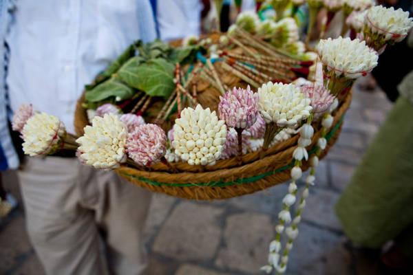 Chính quyền Tunisia đã cấm trồng hoa nhài kể từ sau cuộc Cách mạng Hoa Nhài năm 2010 - Ảnh: Mark Vos