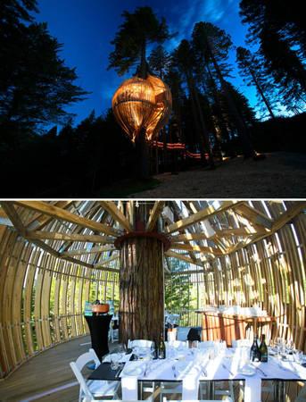Nhà hàng trên cây ở Warkworth, New Zealand - Ảnh: BOREDPANDA