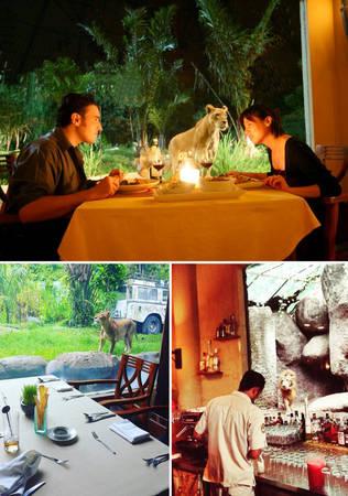 Nhà hàng Tsavo ở Bali - nơi du khách vừa dùng bữa vừa ngắm sư tử - Ảnh: BOREDPANDA