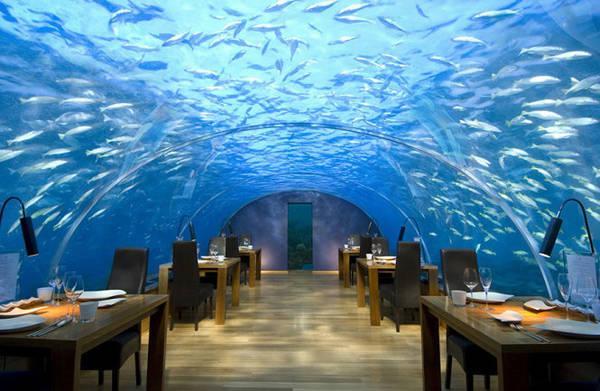 Nhà hàng dưới đáy biển Ithaa ở Alif Dhaal Atoll, Maldives. Nhà hàng nằm sâu dưới biển 5m cho phép du khách khám phá đời sống kỳ thú của các sinh vật biển - Ảnh: BOREDPANDA