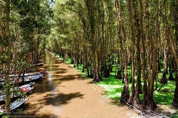 Chèo xuồng ở rừng tràm Trà Sư (An Giang): Mùa nước nổi, lưu lượng nước khu rừng đặc trưng sông Hậu cũng tăng lên đáng kể. Chèo xuồng vào thời gian này, bạn sẽ được thả mình trong không gian cổ tích hoang sơ và trong lành. Ảnh: Tính Huỳnh.