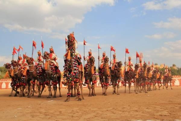 Chuẩn bị cuộc đua lạc đà tại lễ hội sa mạc - Ảnh: wp