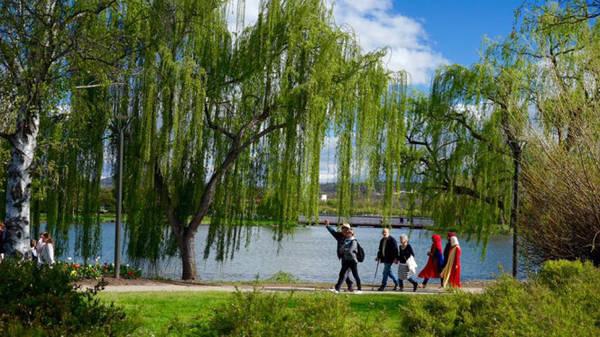 Mùa xuân ở Canberra - Ảnh: N.N.Tuấn
