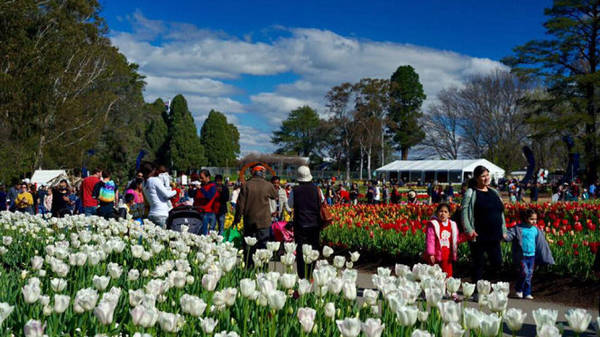 Lễ hội hoa Floriade ngập tràn du khách - Ảnh: N.N.Tuấn